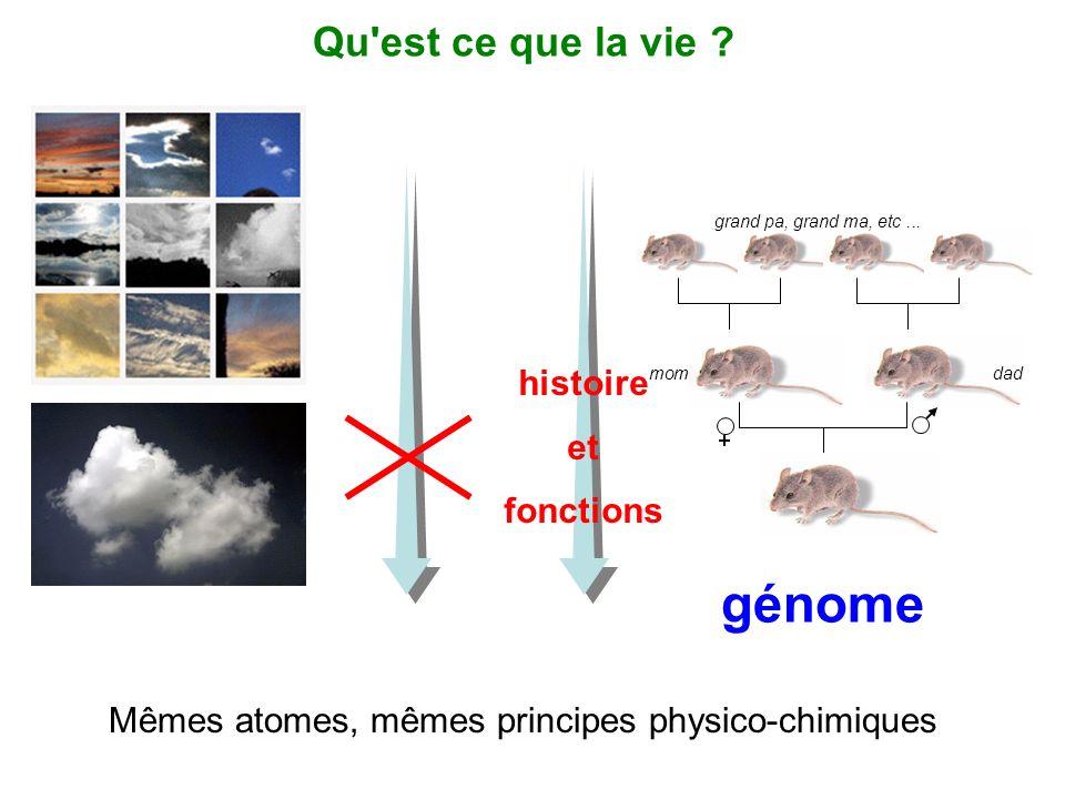 grand pa, grand ma, etc... momdad génome Qu'est ce que la vie ? Mêmes atomes, mêmes principes physico-chimiques histoire et fonctions