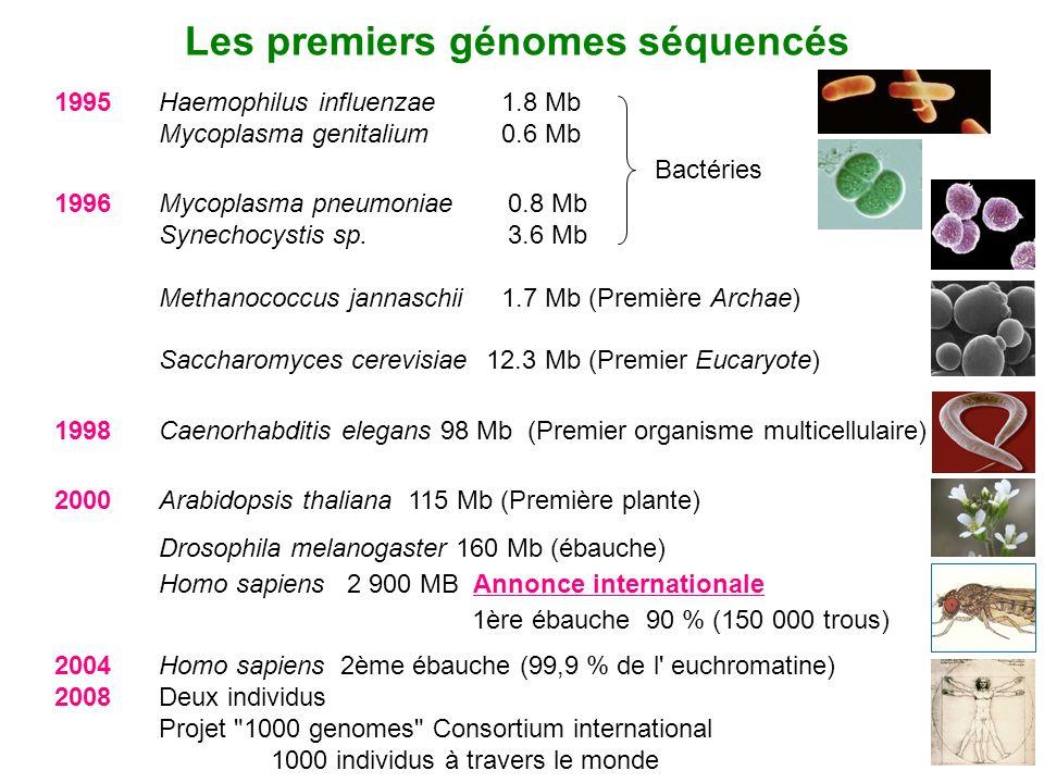 Les premiers génomes séquencés 1995 Haemophilus influenzae 1.8 Mb Mycoplasma genitalium 0.6 Mb 2004 Homo sapiens 2ème ébauche (99,9 % de l' euchromati