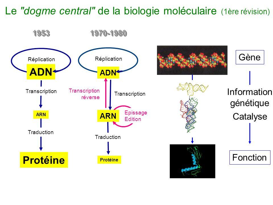 ADN ARN Protéine Transcription Traduction Réplication 1970-1980 Transcription réverse Epissage Edition 1953 ARN Protéine Réplication Transcription Tra