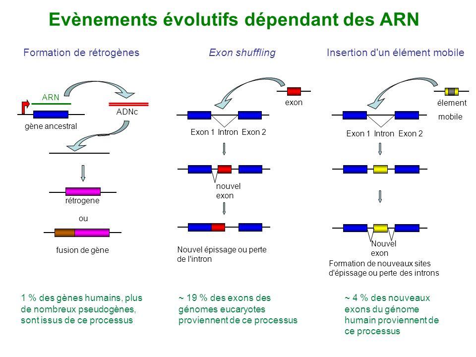 Exon shuffling ~ 19 % des exons des génomes eucaryotes proviennent de ce processus exon Exon 1Exon 2Intron nouvel exon Nouvel épissage ou perte de l'i