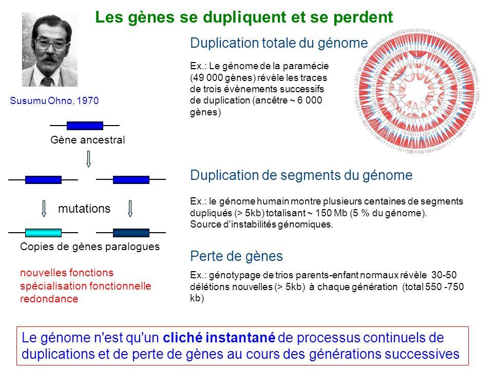 Les gènes se dupliquent et se perdent Gène ancestral Le génome n'est qu'un cliché instantané de processus continuels de duplications et de perte de gè