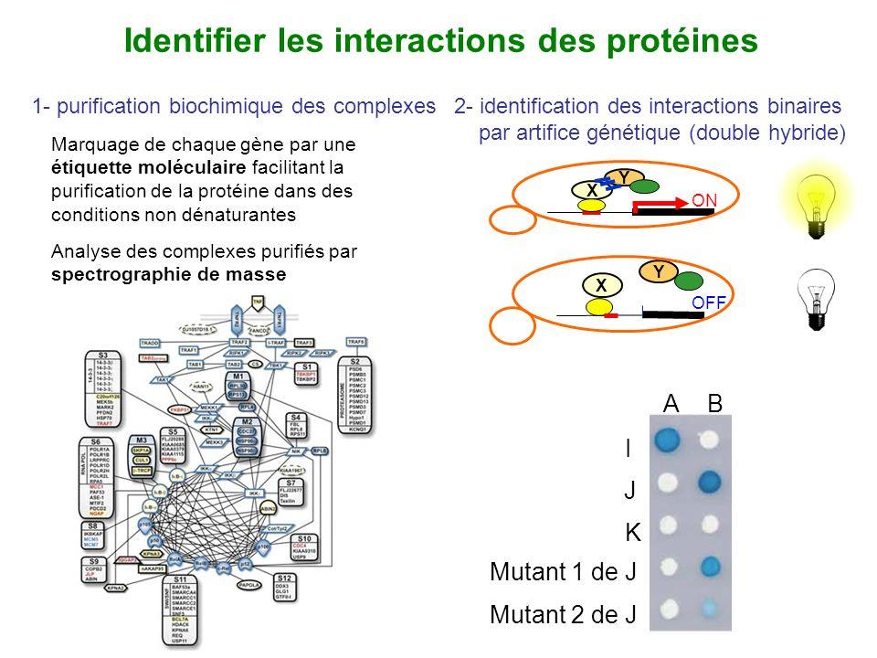 Identifier les interactions des protéines 1- purification biochimique des complexes Marquage de chaque gène par une étiquette moléculaire facilitant l