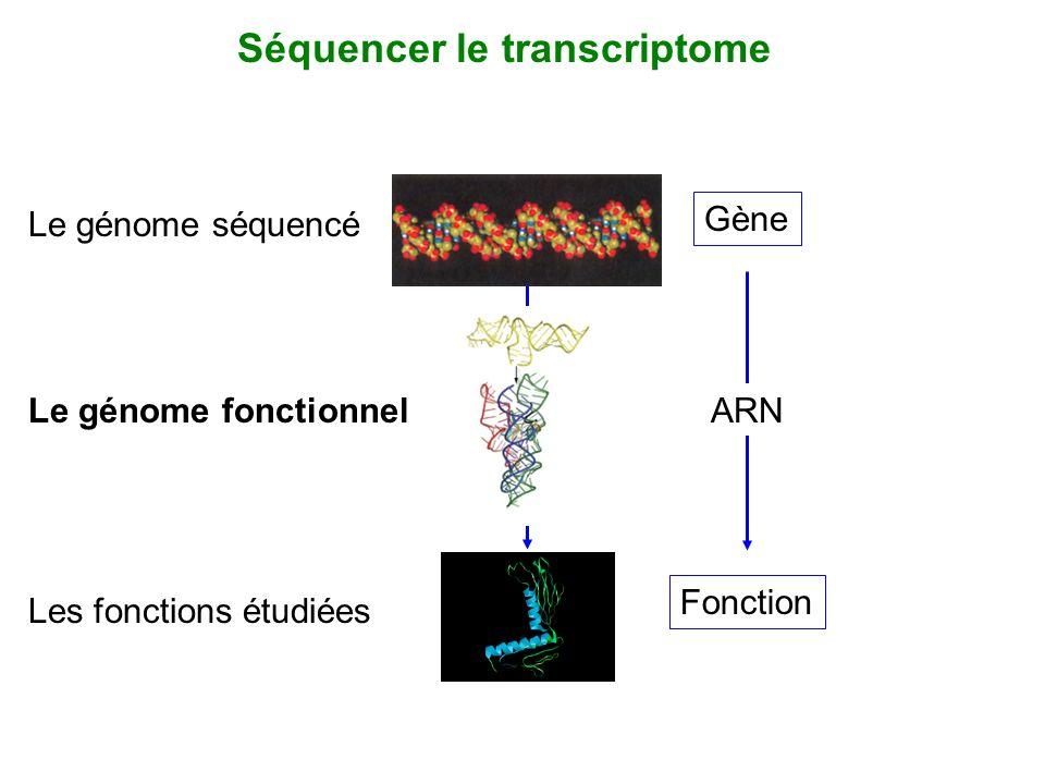 Gène Fonction ARNLe génome fonctionnel Le génome séquencé Séquencer le transcriptome Les fonctions étudiées
