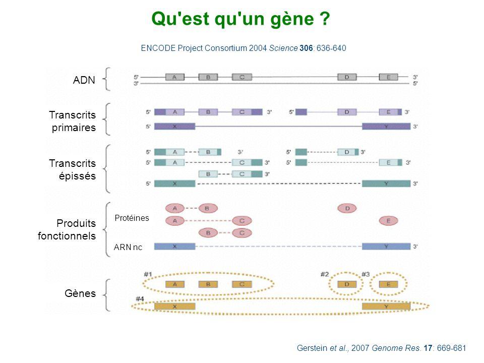 Qu'est qu'un gène ? Gerstein et al., 2007 Genome Res. 17: 669-681 ENCODE Project Consortium 2004 Science 306: 636-640 ADN Transcrits primaires Transcr