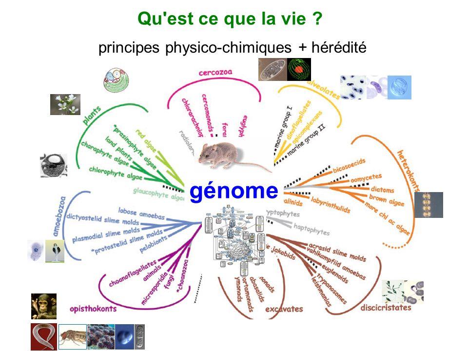 génome Qu'est ce que la vie ? principes physico-chimiques + hérédité