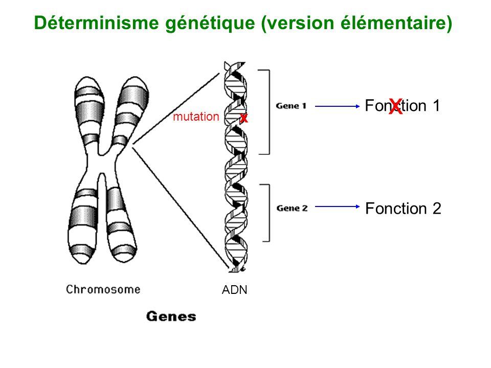 Fonction 1 Fonction 2 x x mutation ADN Déterminisme génétique (version élémentaire)