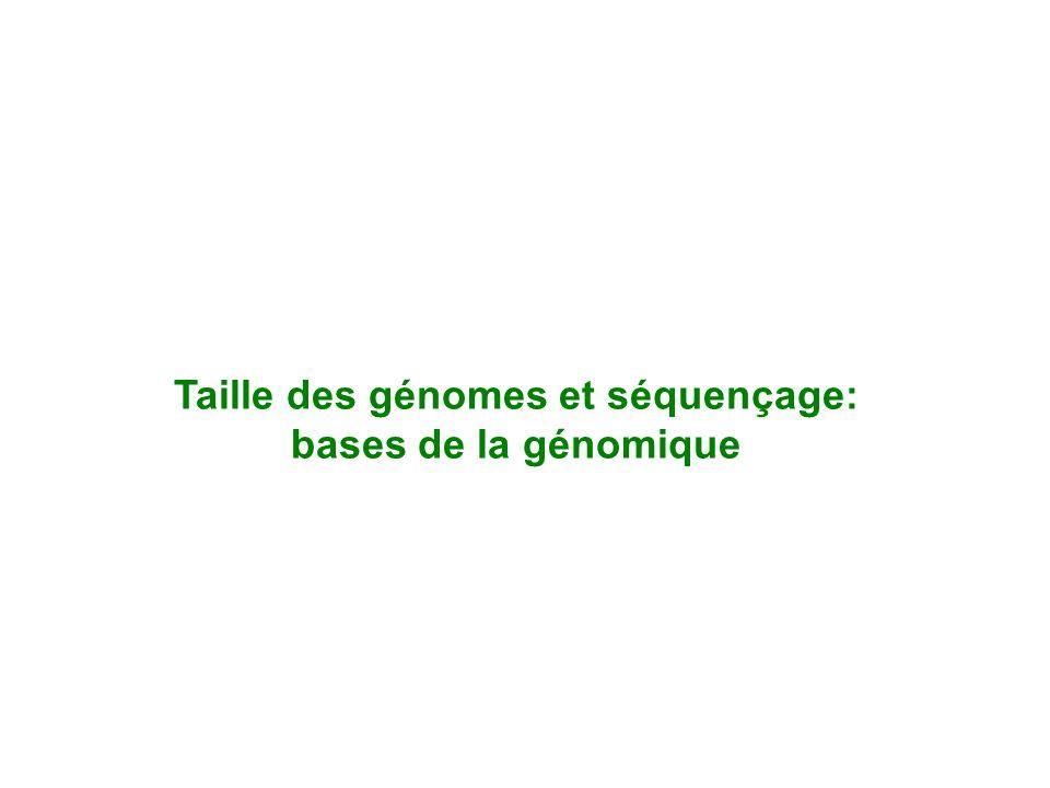 Taille des génomes et séquençage: bases de la génomique