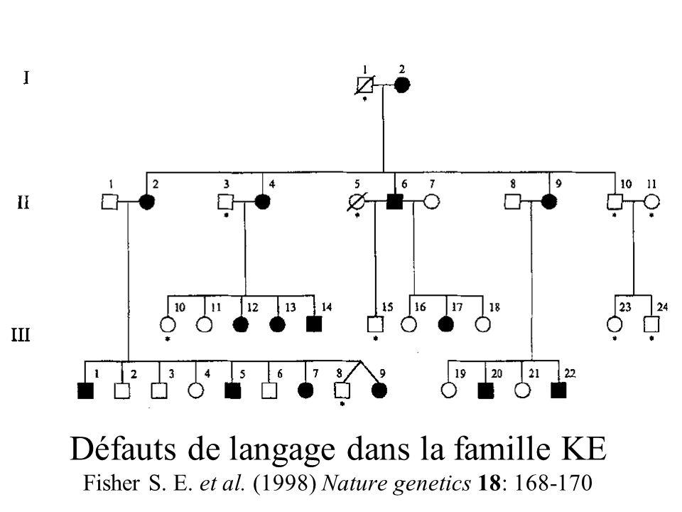 Défauts de langage dans la famille KE Fisher S. E. et al. (1998) Nature genetics 18: 168-170
