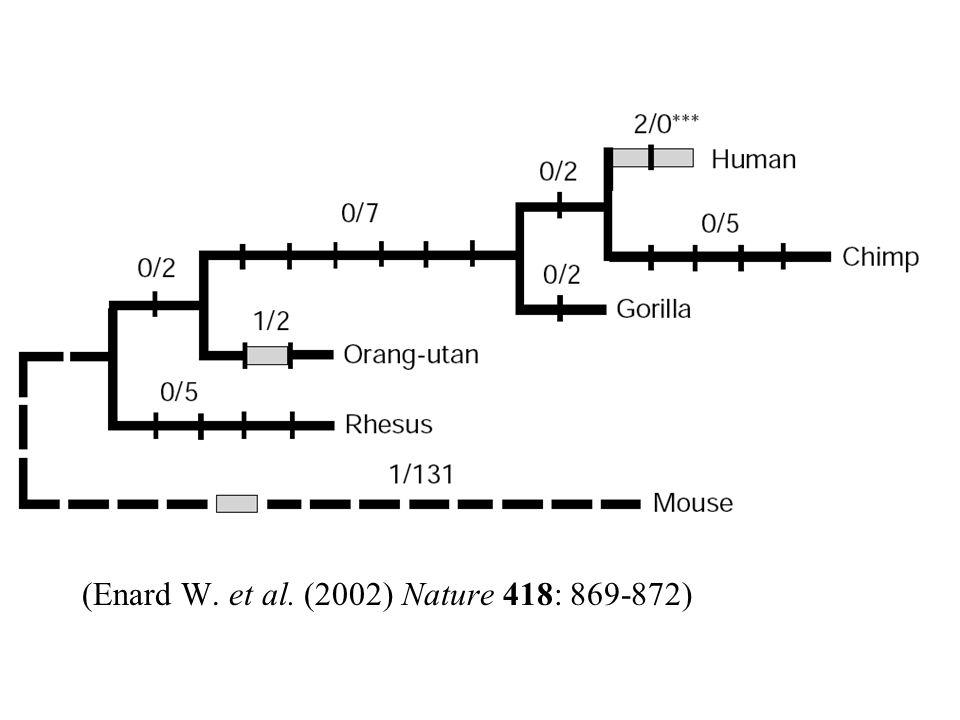 (Enard W. et al. (2002) Nature 418: 869-872)