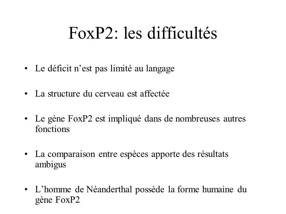 FoxP2: les difficultés Le déficit nest pas limité au langage La structure du cerveau est affectée Le gène FoxP2 est impliqué dans de nombreuses autres