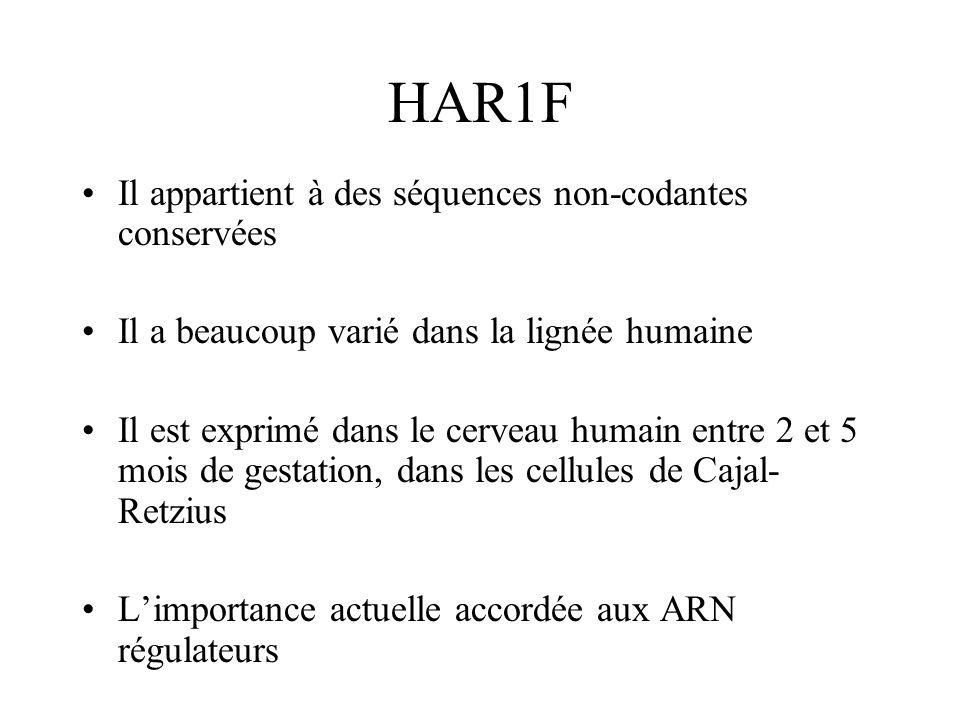 HAR1F Il appartient à des séquences non-codantes conservées Il a beaucoup varié dans la lignée humaine Il est exprimé dans le cerveau humain entre 2 e