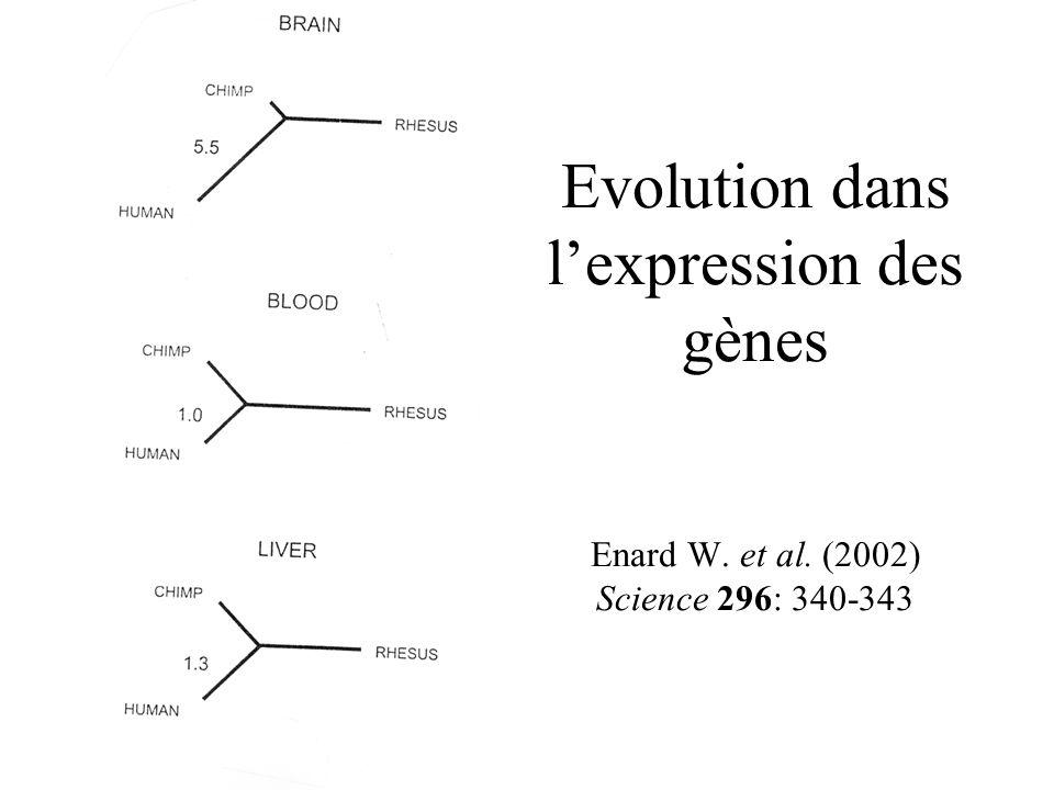 Evolution dans lexpression des gènes Enard W. et al. (2002) Science 296: 340-343
