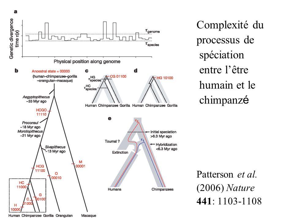 Complexité du processus de spéciation entre lêtre humain et le chimpanz é Patterson et al. (2006) Nature 441: 1103-1108