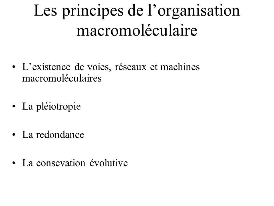 Les principes de lorganisation macromoléculaire Lexistence de voies, réseaux et machines macromoléculaires La pléiotropie La redondance La consevation