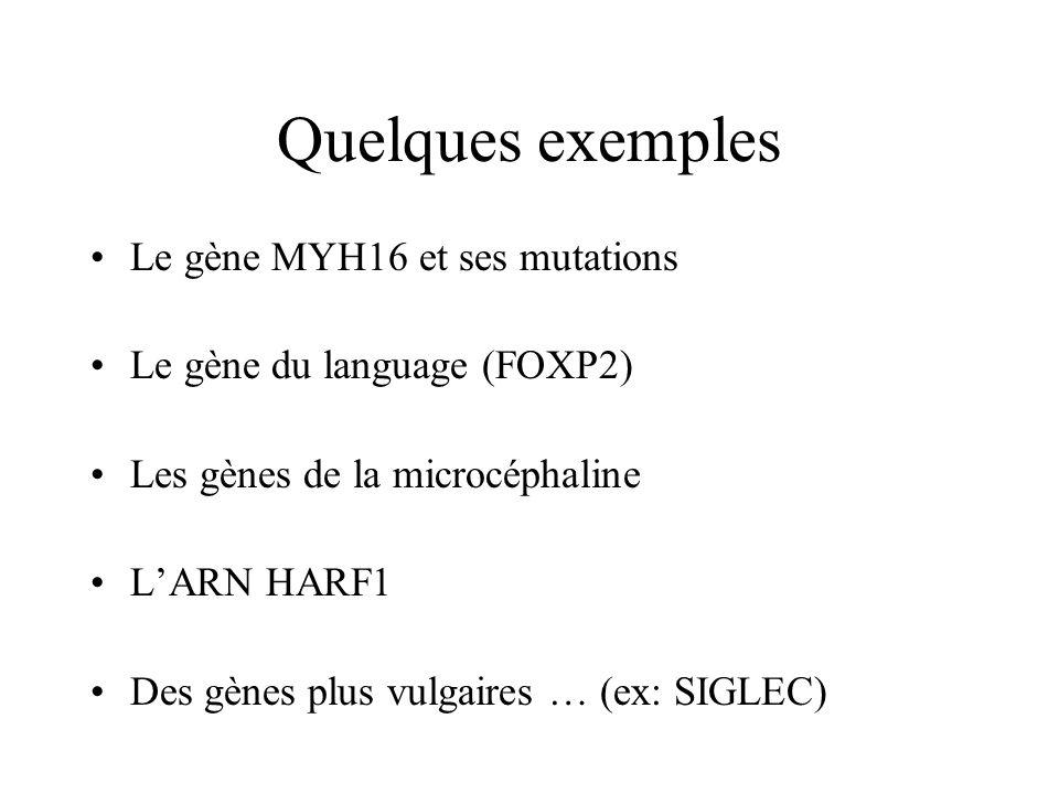 Quelques exemples Le gène MYH16 et ses mutations Le gène du language (FOXP2) Les gènes de la microcéphaline LARN HARF1 Des gènes plus vulgaires … (ex: