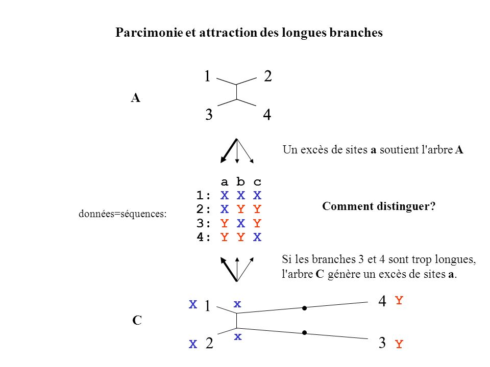 Parcimonie et attraction des longues branches 12 3 4 a b c 1: X X X 2: X Y Y 3: Y X Y 4: Y Y X données=séquences: 1 4 2 3 12 3 4 A C Un excès de sites a soutient l arbre A Si les branches 3 et 4 sont trop longues, l arbre C génère un excès de sites a.