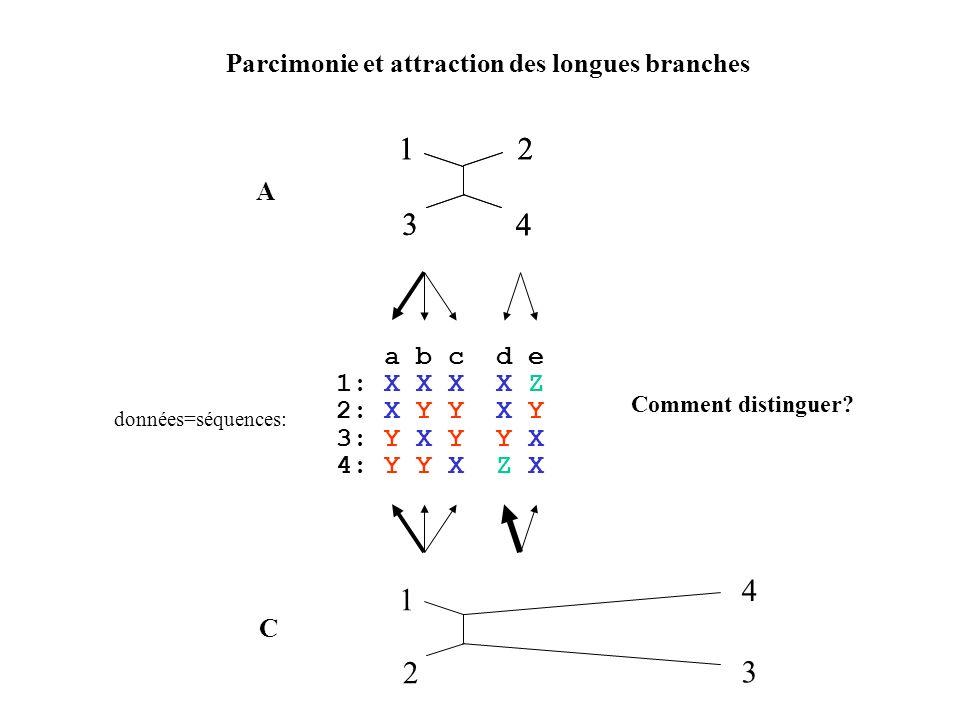 Parcimonie et attraction des longues branches 12 3 4 a b c d e 1: X X X X Z 2: X Y Y X Y 3: Y X Y Y X 4: Y Y X Z X données=séquences: 1 4 2 3 12 3 4 A