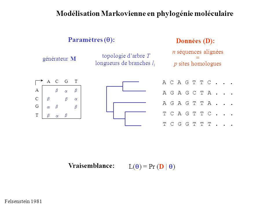 Modélisation Markovienne en phylogénie moléculaire Données (D): n séquences alignées = p sites homologues A C A G T T C... A G A G C T A... A G A G T