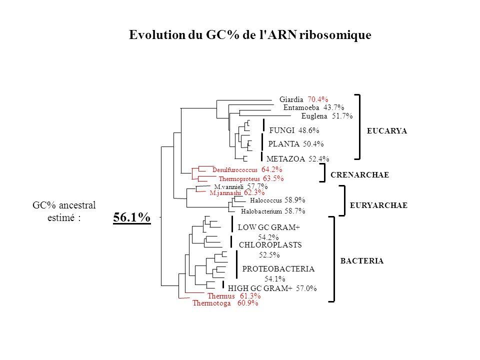56.1% GC% ancestral estimé : Evolution du GC% de l'ARN ribosomique