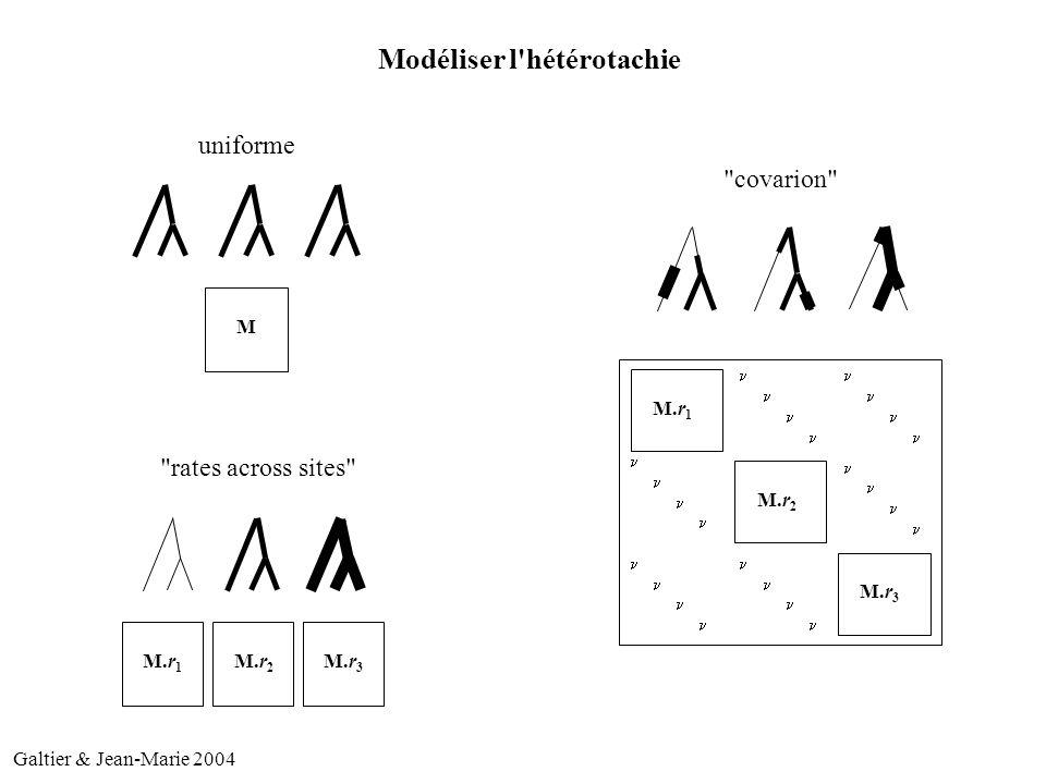 M M.r 1 M.r 2 M.r 3 M.r 1 M.r 2 M.r 3 Modéliser l hétérotachie uniforme rates across sites covarion Galtier & Jean-Marie 2004