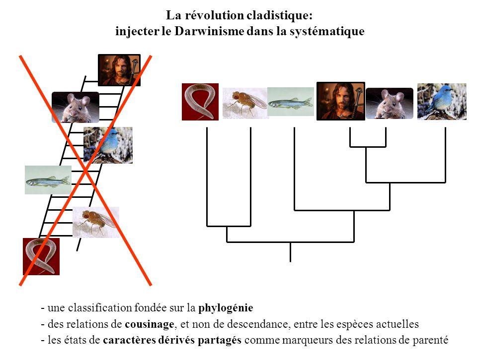 La révolution cladistique: injecter le Darwinisme dans la systématique - une classification fondée sur la phylogénie - des relations de cousinage, et non de descendance, entre les espèces actuelles - les états de caractères dérivés partagés comme marqueurs des relations de parenté