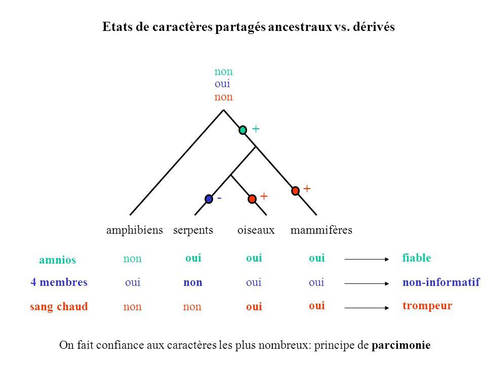 Etats de caractères partagés ancestraux vs. dérivés amphibiensserpentsoiseauxmammifères amnios non oui non fiable + sang chaudoui non trompeur non + +