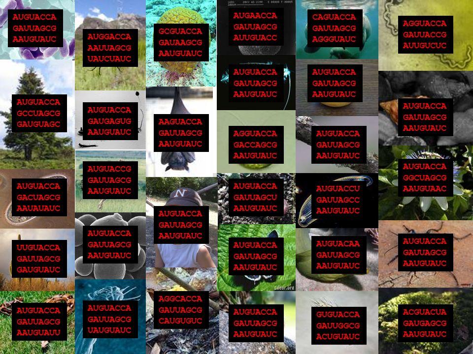 AUGUACCA GAUUAGCG AAUGUAUC AUGGACCA AAUUAGCG UAUCUAUC GCGUACCA GAUAAGCG AAUGUAUC AUGAACCA GAUUAGCG AUUGUACC AUGUACCA GAUUAGCG AAUGUAUC AUGUACCA GAUUAGCG AAUGUAUC CAGUACCA GAUUAGCG AGGGUAUC AGGUACCA GAUUACCG AUUGUCUC AUGUACCA GAUUAGCG AAUGUAUC AUGUACCA GGCUAGCG AAUGUAAC AUGUACCA GAUUAGCG AAUGUAUC ACGUACUA GAUGAGCG AAUGUAUC GUGUACCA GAUUGGCG ACUGUAUC AUGUACAA GAUUAGCG AAUGUAUC AUGUACCU GAUUAGCC AAUGUAUC AUGUACCA GAUUAGCG AAUGUAUC AGGUACCA GACCAGCG AAUGUAUC AUGUACCA GAUUAGCU AAUGUAUC AUGUACCA GAUUAGCG AAUGUAUC AUGUACCA GAUUAGCG AAUGUAUC AGGCACCA GAUUAGCG CAUGUGUC AUGUACCA GAUUAGCG AAUGUAUC AAGUACCA GAUUAGCG AAUGUAUC AUGUACCA GAUGAGUG AAUGUAUC AUGUACCG GAUUAGCG AAUGUAUC AUGUACCA GAUUAGCG AAUGUAUC AUGUACCA GAUUAGCG UAUGUAUC AUGUACCA GAUUAGCG AAUGUAUU UUGUACCA GAUUAGCG GAUGUAUC AUGUACCA GACUAGCG AAUAUAUC AUGUACCA GCCUAGCG GAUGUAGC