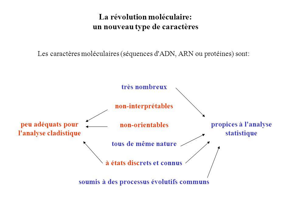 La révolution moléculaire: un nouveau type de caractères Les caractères moléculaires (séquences d ADN, ARN ou protéines) sont: très nombreux non-interprétables non-orientables tous de même nature à états discrets et connus soumis à des processus évolutifs communs peu adéquats pour l analyse cladistique propices à l analyse statistique