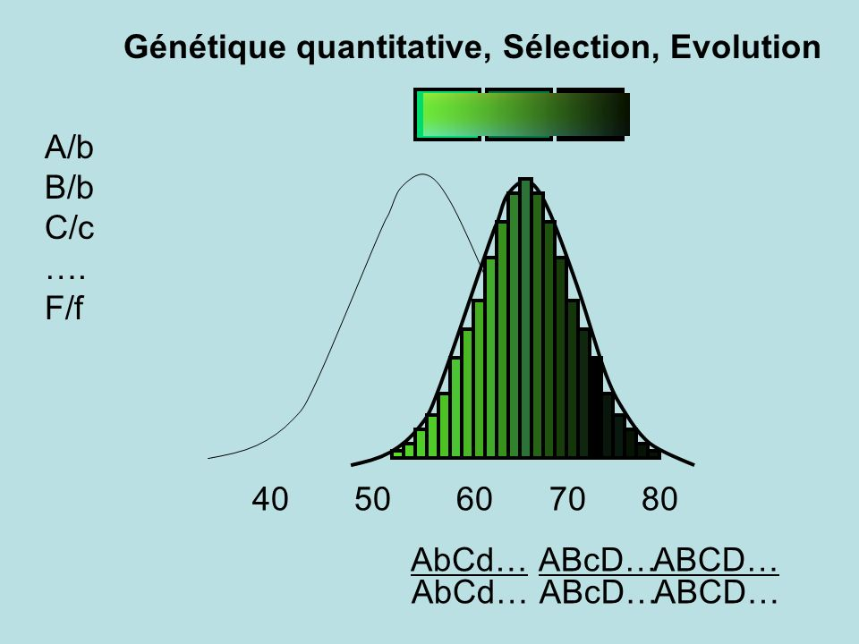 ABcD… A/b B/b C/c …. F/f 40 50 60 70 80 ABcD… AbCd… Génétique quantitative, Sélection, Evolution ABCD…