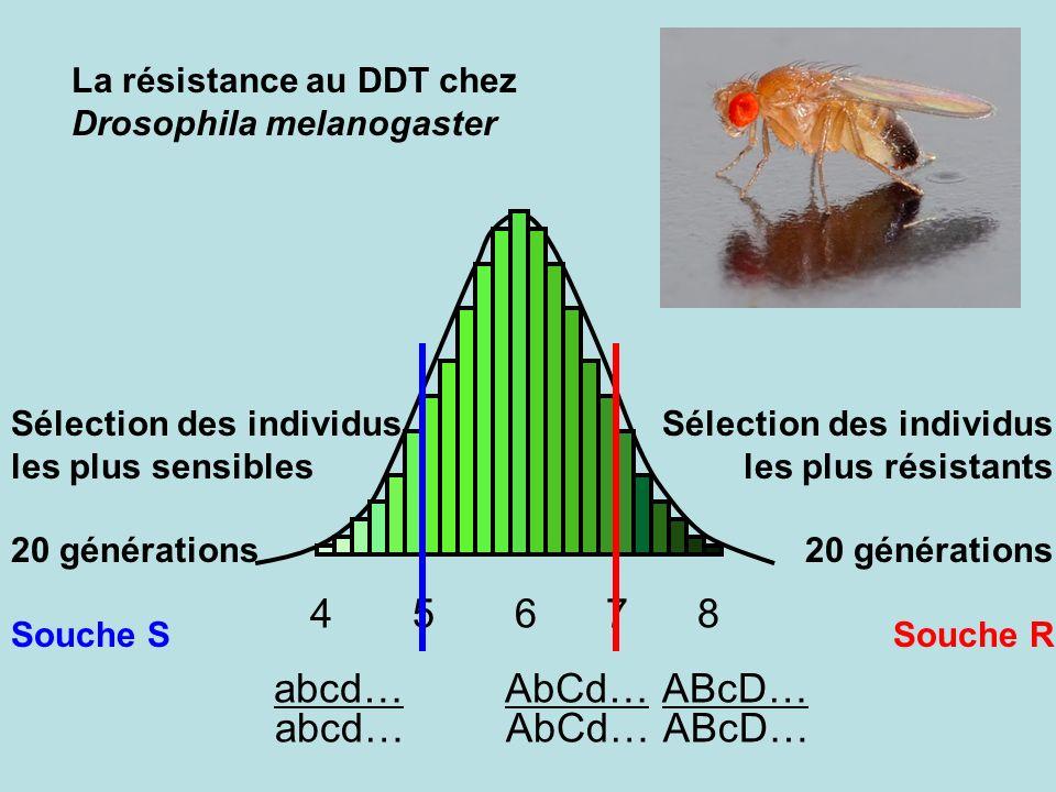 ABcD…abcd…AbCd… 4 5 6 7 8 ABcD…abcd…AbCd… La résistance au DDT chez Drosophila melanogaster Sélection des individus les plus résistants 20 générations