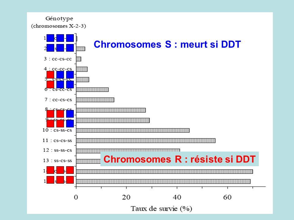 Chromosomes S : meurt si DDT Chromosomes R : résiste si DDT