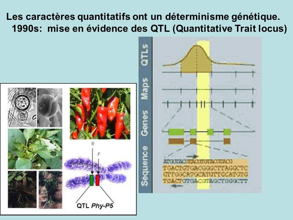 Les caractères quantitatifs ont un déterminisme génétique. 1990s: mise en évidence des QTL (Quantitative Trait locus)