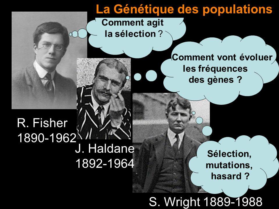 R. Fisher 1890-1962 J. Haldane 1892-1964 S. Wright 1889-1988 Comment vont évoluer les fréquences des gènes ? Comment agit la sélection ? Sélection, mu