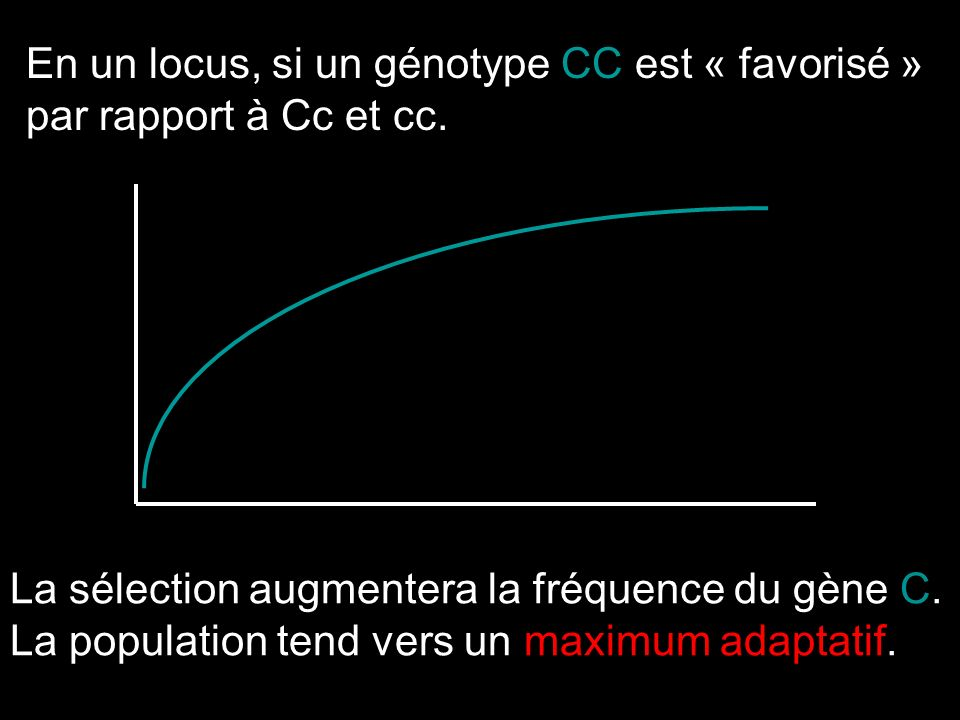 En un locus, si un génotype CC est « favorisé » par rapport à Cc et cc. La sélection augmentera la fréquence du gène C. La population tend vers un max