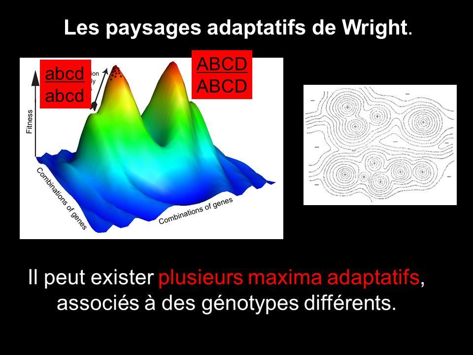 Les paysages adaptatifs de Wright. Il peut exister plusieurs maxima adaptatifs, associés à des génotypes différents. ABCD abcd