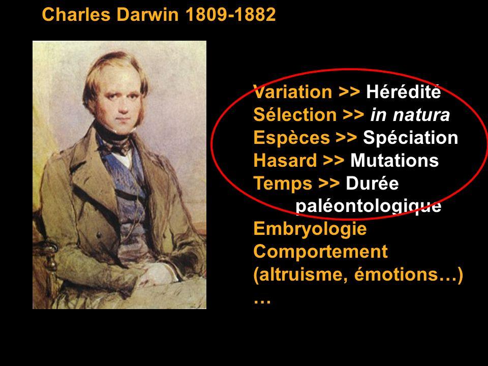 Charles Darwin 1809-1882 Variation >> Hérédité Sélection >> in natura Espèces >> Spéciation Hasard >> Mutations Temps >> Durée paléontologique Embryol