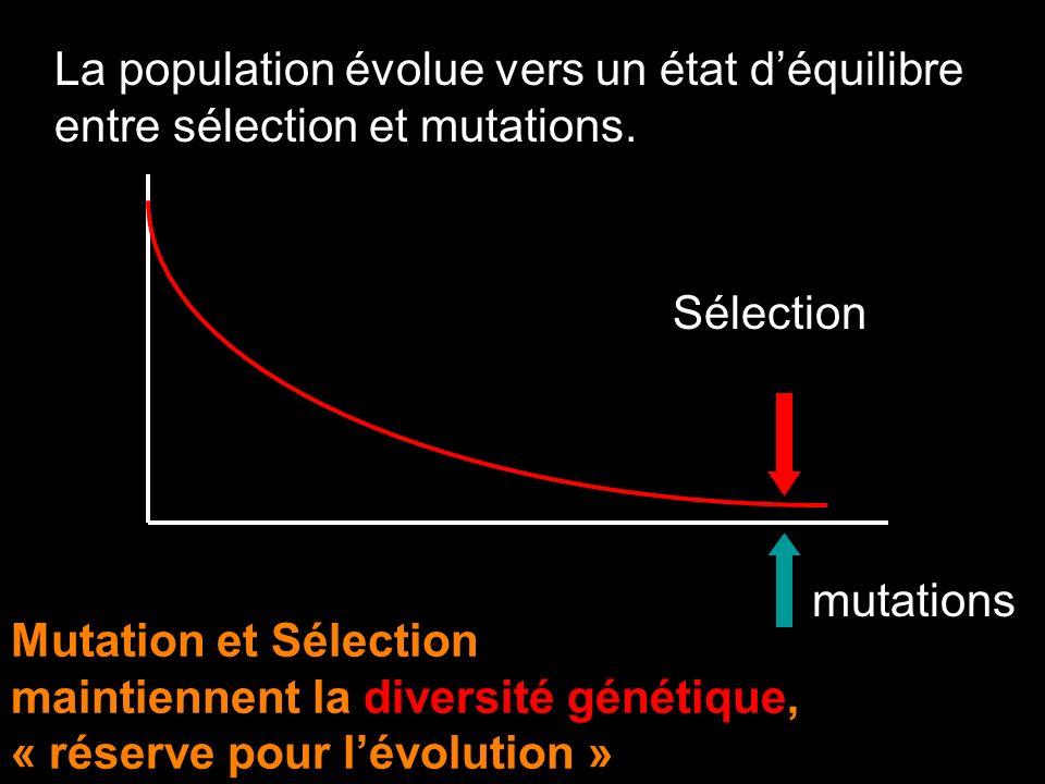 La population évolue vers un état déquilibre entre sélection et mutations. Sélection mutations Mutation et Sélection maintiennent la diversité génétiq