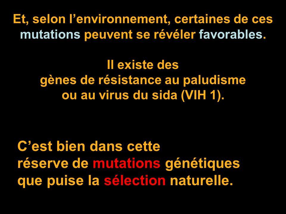 Et, selon lenvironnement, certaines de ces mutations peuvent se révéler favorables. Il existe des gènes de résistance au paludisme ou au virus du sida