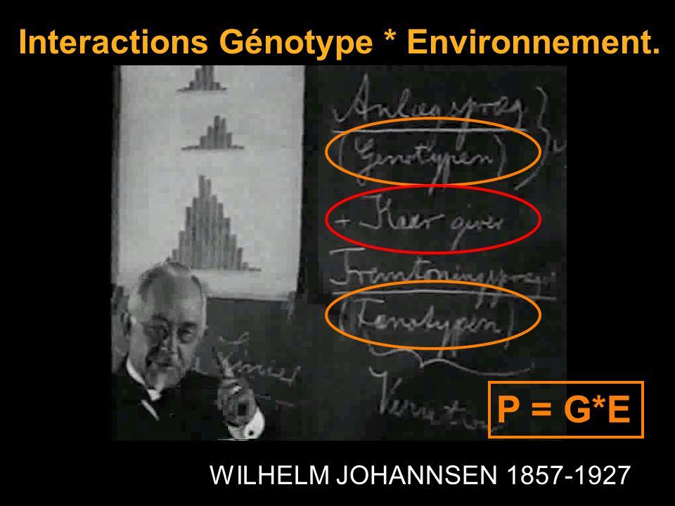 WILHELM JOHANNSEN 1857-1927 Interactions Génotype * Environnement. P = G*E