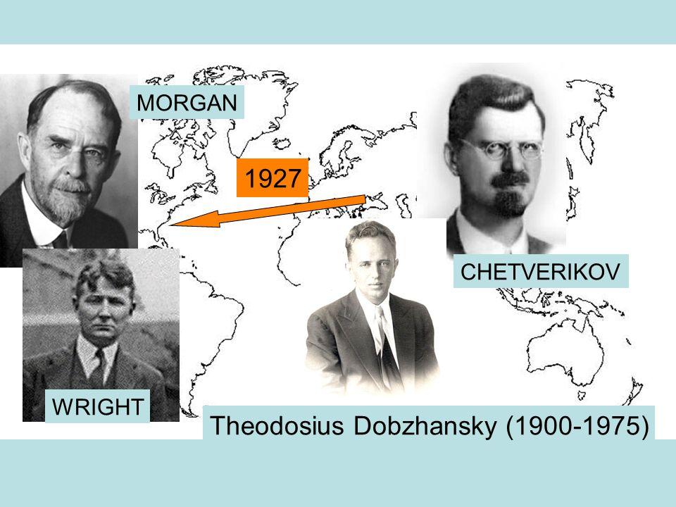 Theodosius Dobzhansky (1900-1975) CHETVERIKOV MORGAN WRIGHT 1927