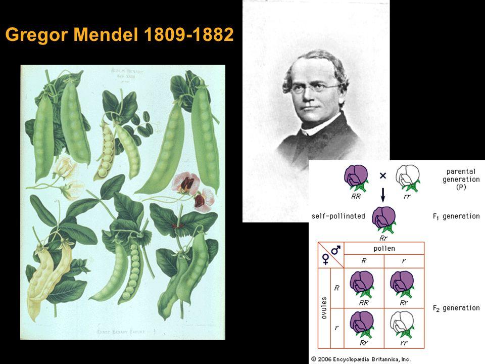 Gregor Mendel 1809-1882