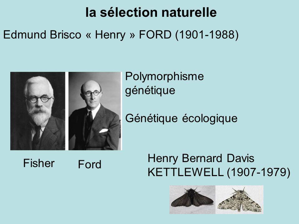 Edmund Brisco « Henry » FORD (1901-1988) Henry Bernard Davis KETTLEWELL (1907-1979) la sélection naturelle Polymorphisme génétique Génétique écologiqu