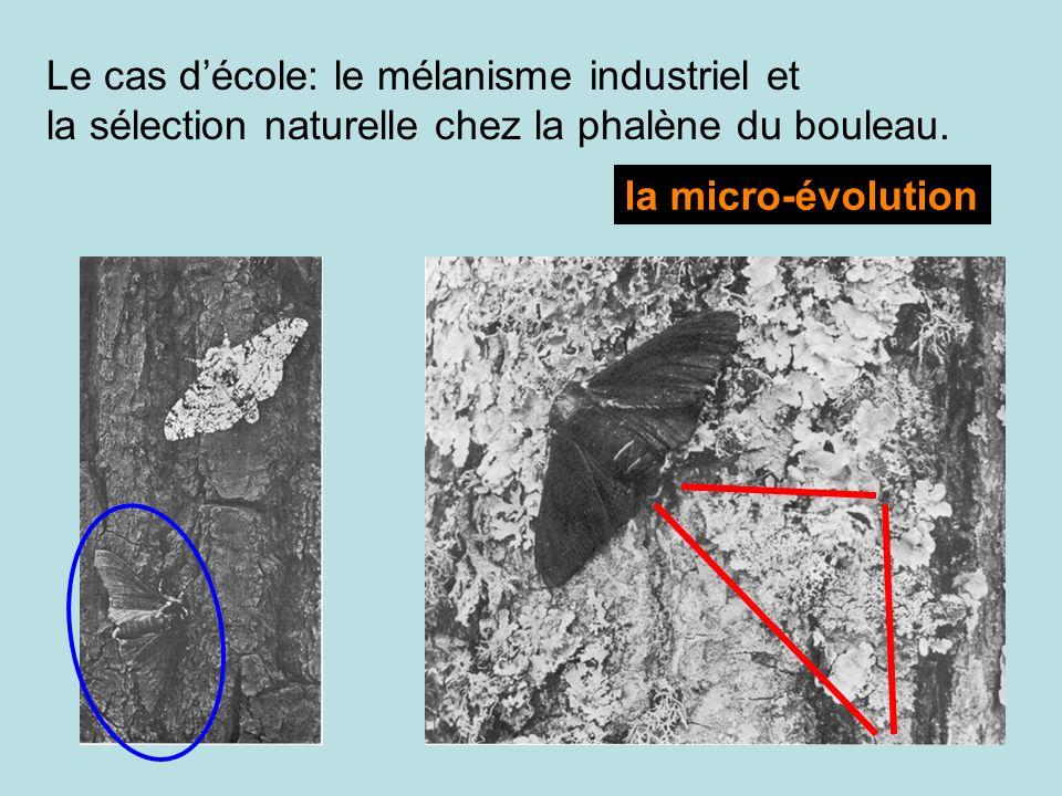 Le cas décole: le mélanisme industriel et la sélection naturelle chez la phalène du bouleau. la micro-évolution
