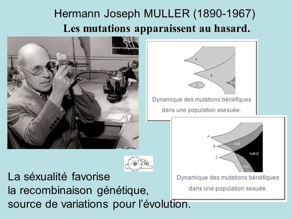 Hermann Joseph MULLER (1890-1967) La séxualité favorise la recombinaison génétique, source de variations pour lévolution. Les mutations apparaissent a