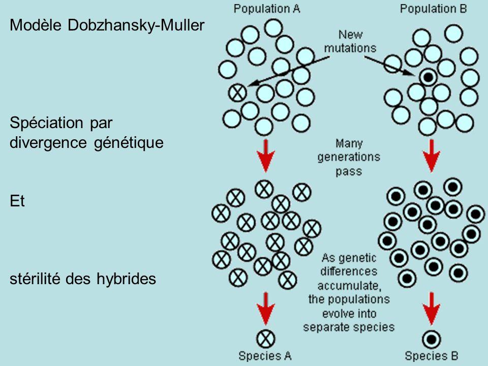 Modèle Dobzhansky-Muller Spéciation par divergence génétique Et stérilité des hybrides