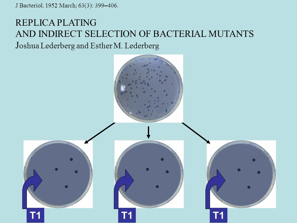 J Bacteriol. 1952 March; 63(3): 399 – 406. REPLICA PLATING AND INDIRECT SELECTION OF BACTERIAL MUTANTS J oshua Lederberg and Esther M. Lederberg T1