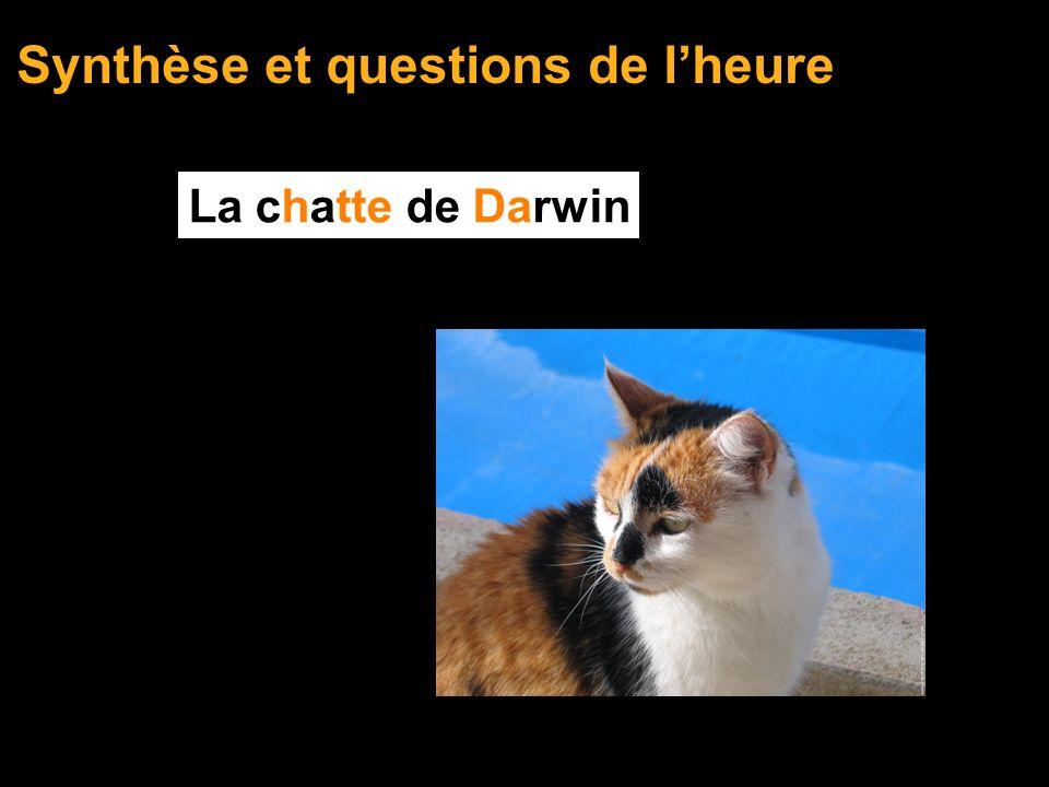 La chatte de Darwin Synthèse et questions de lheure
