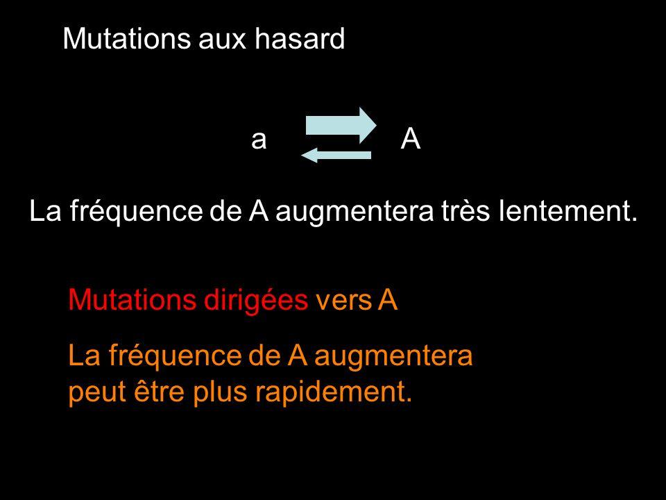 Mutations aux hasard Aa La fréquence de A augmentera très lentement. Mutations dirigées vers A La fréquence de A augmentera peut être plus rapidement.