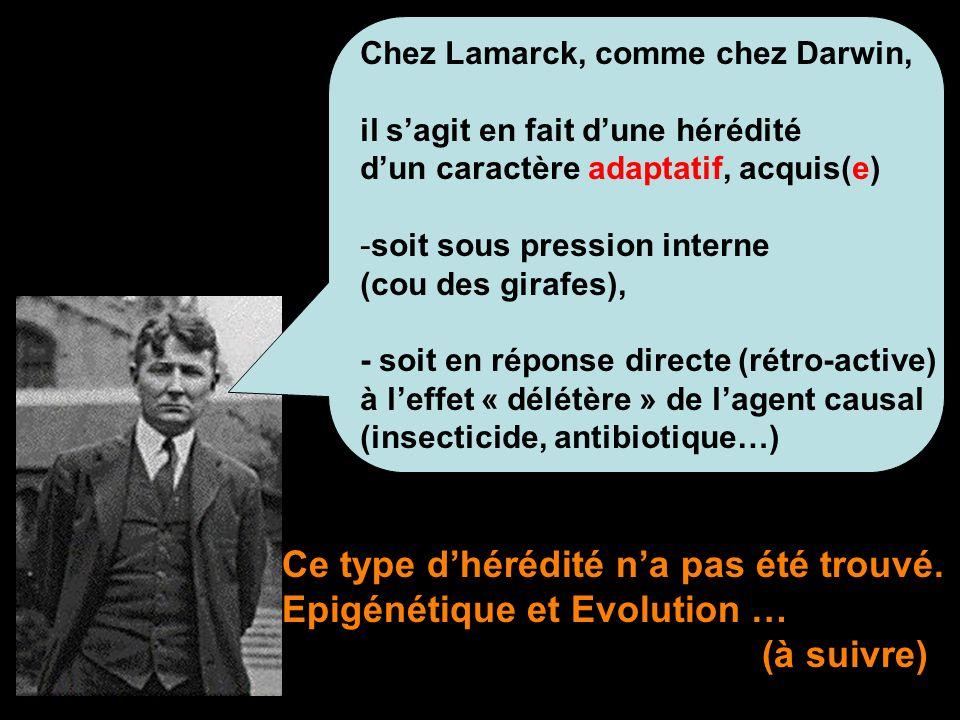 Chez Lamarck, comme chez Darwin, il sagit en fait dune hérédité dun caractère adaptatif, acquis(e) -soit sous pression interne (cou des girafes), - so