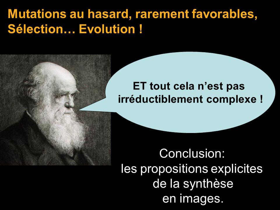 Mutations au hasard, rarement favorables, Sélection… Evolution ! Conclusion: les propositions explicites de la synthèse en images. ET tout cela nest p